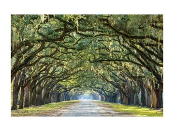 Fotoattēls Signal Meble Trees I Glass Painting 120x80cm