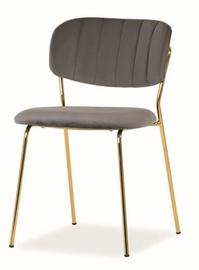Ēdamistabas krēsls Signal Meble Carlo Velvet Grey/Gold, 1 gab.