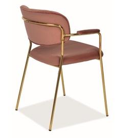 Ēdamistabas krēsls Signal Meble Carlo II Velvet Antique Pink/Gold, 1 gab.