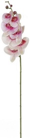 Home4you Orchid 2 In Garden H85cm 83873 White / Pink