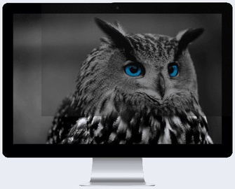 "Natec Owl Privacy Filter 24"" 16:9"