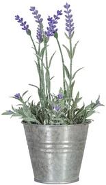 Home4you Lavender In Garden H25cm Purple 83822
