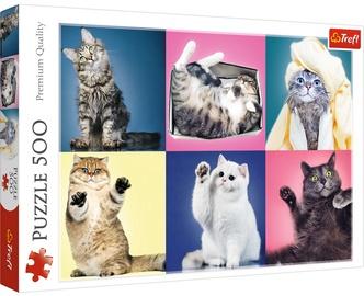 Puzle Trefl Kittens 37377, 500 gab.