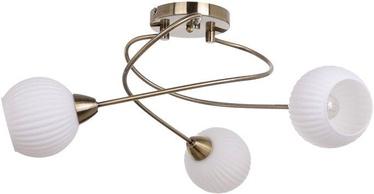Verners 148258 RIBERO Brass
