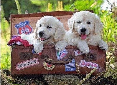 Пазл Ravensburger XXL Traveling Pups 10538, 100 шт.