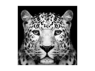 Fotoattēls Signal Meble Panther, 800 mm x 800 mm