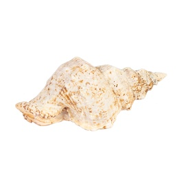 Decoration In Home Snail Shell 24xH11cm