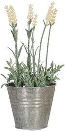 Home4you Lavender In Garden H25cm White 83821