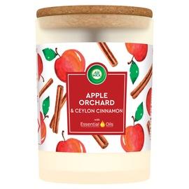 Aromātiskā svece Airwick Apple Orchard, 185 g, 54 h