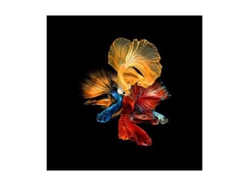 Signal Meble Betta II Glass Painting 80x80cm