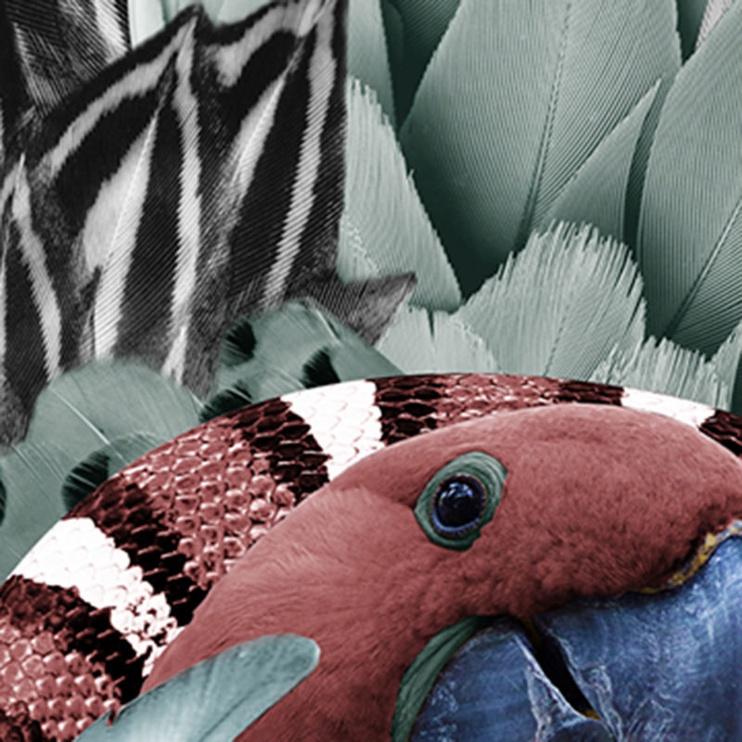 Lodger Skier BotAnimal Parrot 12/18