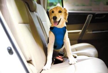 Automašīnu drošības josta Record Car Safety Strap For Dog