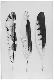 4Living Picture 60x90cm Feathers