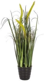 Home4you Bouquet Herbarium With Pot In Garden H59cm Light Green 83828