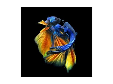 Signal Meble Betta I Glass Painting 80x80cm