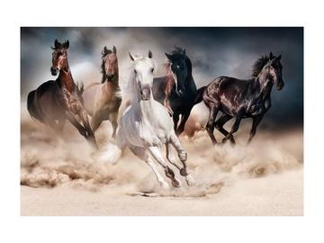 Fotoattēls Signal Meble Horses, 1200 mm x 800 mm