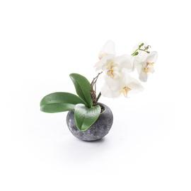 Mākslīgie ziedi puķu podā Artificial Orchid In A Pot 32cm