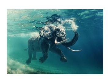 Fotoattēls Signal Meble Elephant Glass Painting 120x80cm