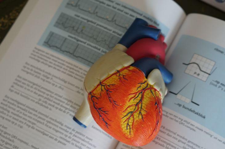 2-fiziskās aktivitātes ietekme uz organismu