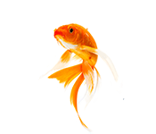 Zivīm