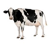 Lauksaimniecības dzīvniekiem